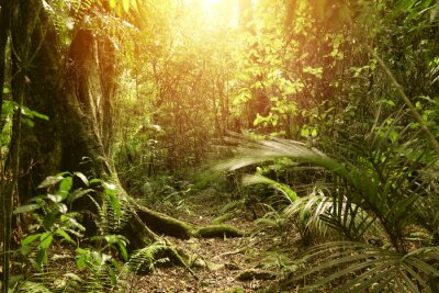 Fototapeta Światło lasu