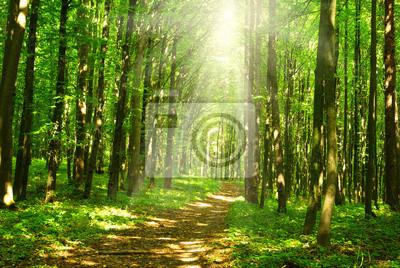 światło słoneczne las