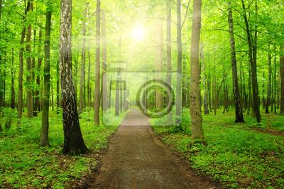 Fototapeta światło słoneczne las