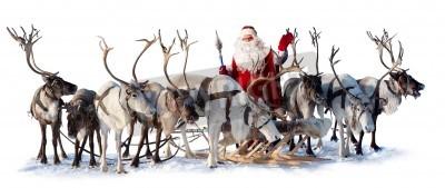 Fototapeta Święty Mikołaj jest w pobliżu jego jelenia w uprzęży na białym tle. On zaprasza i machając ręką.