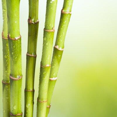 Fototapeta Świeże Bamboo