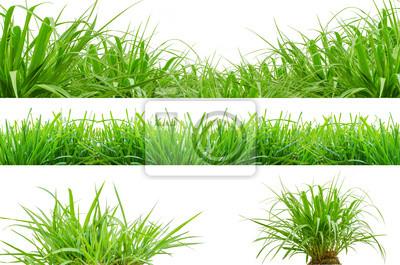 świeże wiosny zielona trawa