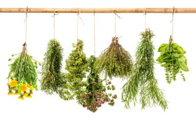 Fototapeta świeże, zdrowe zioła wiszące na białym tle