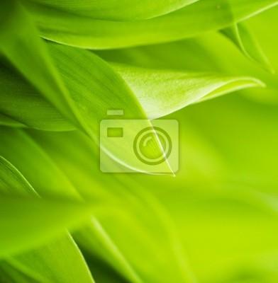 Fototapeta Świeże zielona trawa (płytkie DOF)