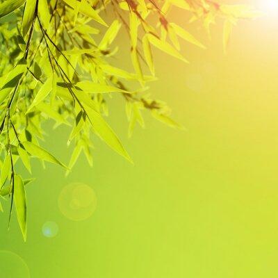 Fototapeta Świeże zielone liście granicy
