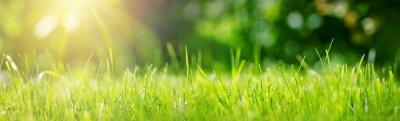 Fototapeta Świeże zielone tło trawy w słoneczny letni dzień w parku