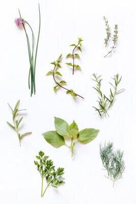 Fototapeta świeże zioła