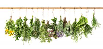 Fototapeta Świeże zioła wiszące. Bazylia, rozmaryn, tymianek, mięta, koper, mówią