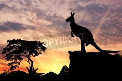 Fototapeta Sylwetka kangura na wzgórzu o zachodzie słońca