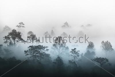 Fototapeta sylwetka wielu warstw lasów tropikalnych lasów tropikalnych objętych mgły porannej mgły pary. Marzycielski brzask w pięknej równinie z rzędem drzew w parku przyrody, Slang Luang, Tajlandia.