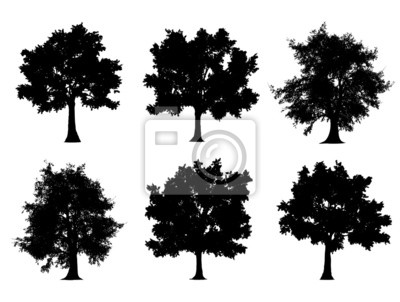 Fototapeta Sylwetki drzewa