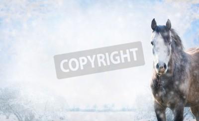 Fototapeta Szary koń na zimowy krajobraz ze śniegiem, banner na stronie internetowej.