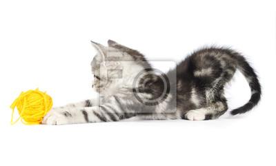 szary kotek gry