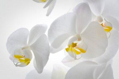 Fototapeta Szczegółowo kwiatów orchidei.