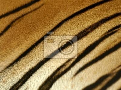 Fototapeta szczegóły futro tygrysa