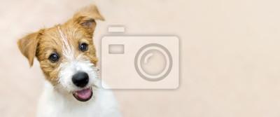 Fototapeta Szczęśliwy uśmiechnięty Jack Russell Terrier psa zwierzęcia domowego szczeniak - sieć sztandar z kopii przestrzenią