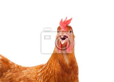 Fototapeta szef kura kurczak szoku i zabawny zaskakujące pojedyncze białym ba