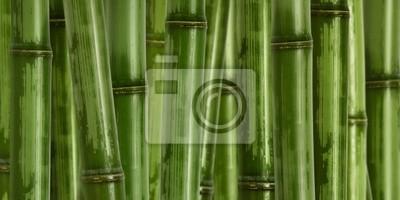 Fototapeta Szeroki trudno bambusa tle