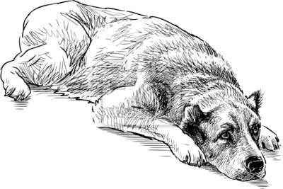 Znalezione obrazy dla zapytania pies szkic
