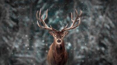 Fototapeta Szlachetny jeleni samiec w zima śniegu lesie. Artystyczny zima boże narodzenie krajobraz.