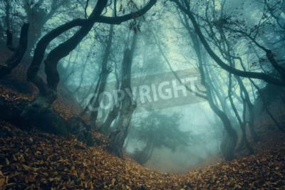 Fototapeta Szlak przez tajemniczego ciemnego starego lasu we mgle. Jesienią rano na Krymie. Magiczna atmosfera. Bajka