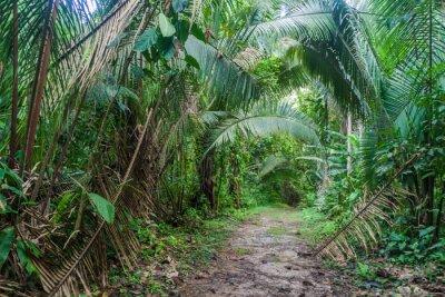 Fototapeta Szlak turystyczny w Cockscomb Basin Wildlife Sanctuary, Belize.