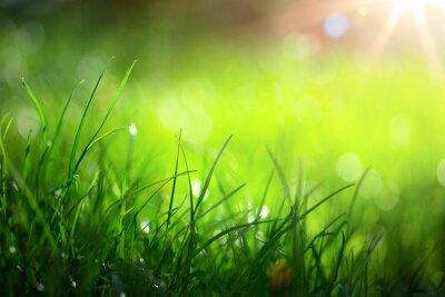Fototapeta sztuka abstrakcyjny przyrodzie wiosna tło lub latem w tle