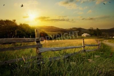 Fototapeta sztuka krajobrazu wiejskiego. pola i trawy