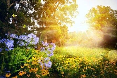 Fototapeta sztuka piękna krajobraz; zachód słońca w parku