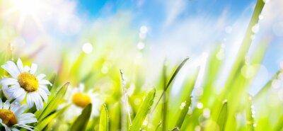 Fototapeta sztuka wiosna kwiat tle; świeża trawa na słonecznym niebie