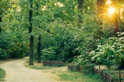 Fototapeta Szutrowa droga Dostęp wśród wysokich bujnych zielonych drzew o zachodzie słońca