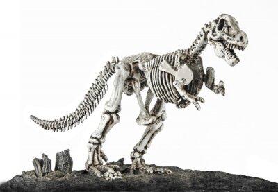 Fototapeta T.REX szkielet