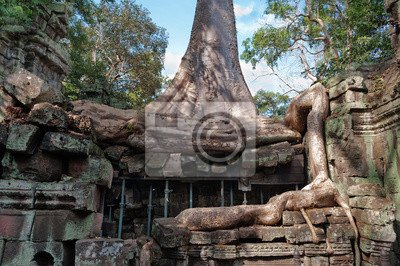 Ta Prohm Temple. Angkor. Kambodża