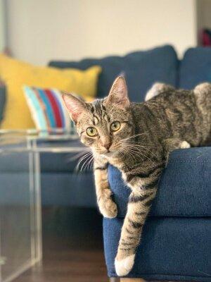 Fototapeta tabby cat posed on modern sofa