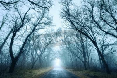 Fototapeta Tajemniczy ciemny las jesienią w zielonej mgle z dróg, drzew i gałęzi. Rano na Krymie