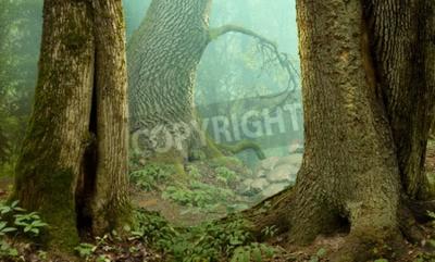 Fototapeta Tajemniczy las krajobraz fantazja