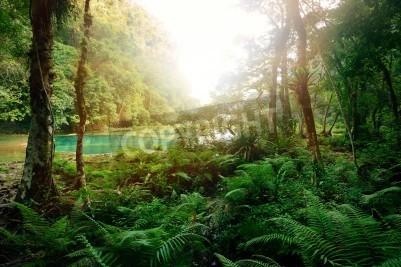 Fototapeta Tajemniczy Majów w dżungli w parku narodowym Semuc Champey Guatemala
