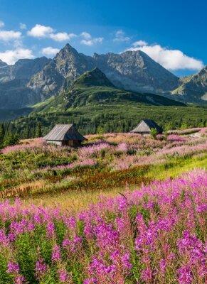Fototapeta Tatry, Polska krajobraz, kolorowe kwiaty i domki w dolinie Gasienicowa (Hala Gasienicowa), lato
