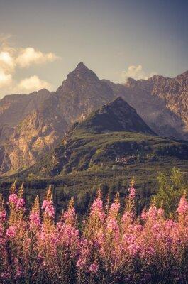 Fototapeta Tatry, Polska krajobraz, kolorowe kwiaty w dolinie Gasienicowa (Hala Gasienicowa), lato