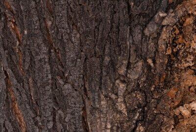 Tekstura kory drzewa.