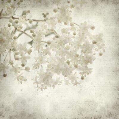 Fototapeta teksturowane starych papieru tła z czarnym kwiatów bzu czarnego
