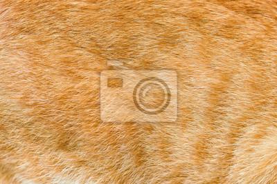 Fototapeta Tekstury futra psa