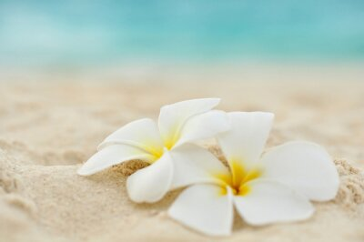 Fototapeta Tempelblume am Strand