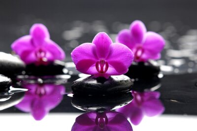 terapii kamienie z różowa orchidea na kamyk