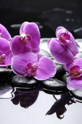 terapii kamienie z różowa orchidea refleksji