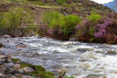 Fototapeta The river in the Altai Mountains