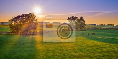 Fototapeta Thoroughbred Horses Grazing at Sunset