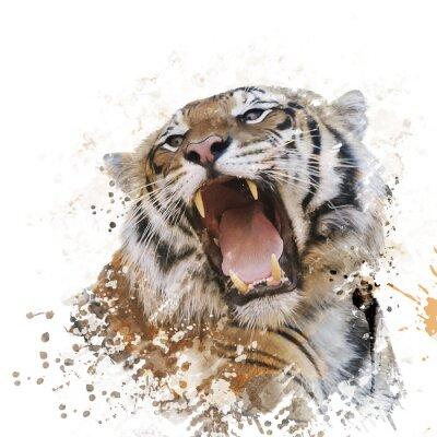 Fototapeta Tiger Portret akwarela