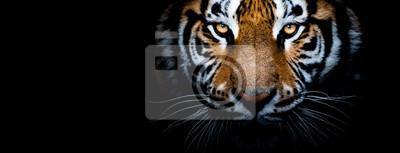 Fototapeta Tiger with a black background