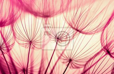 Tło kwiat mniszka lekarskiego